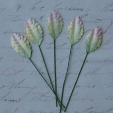 Листья « Зелено –белые»